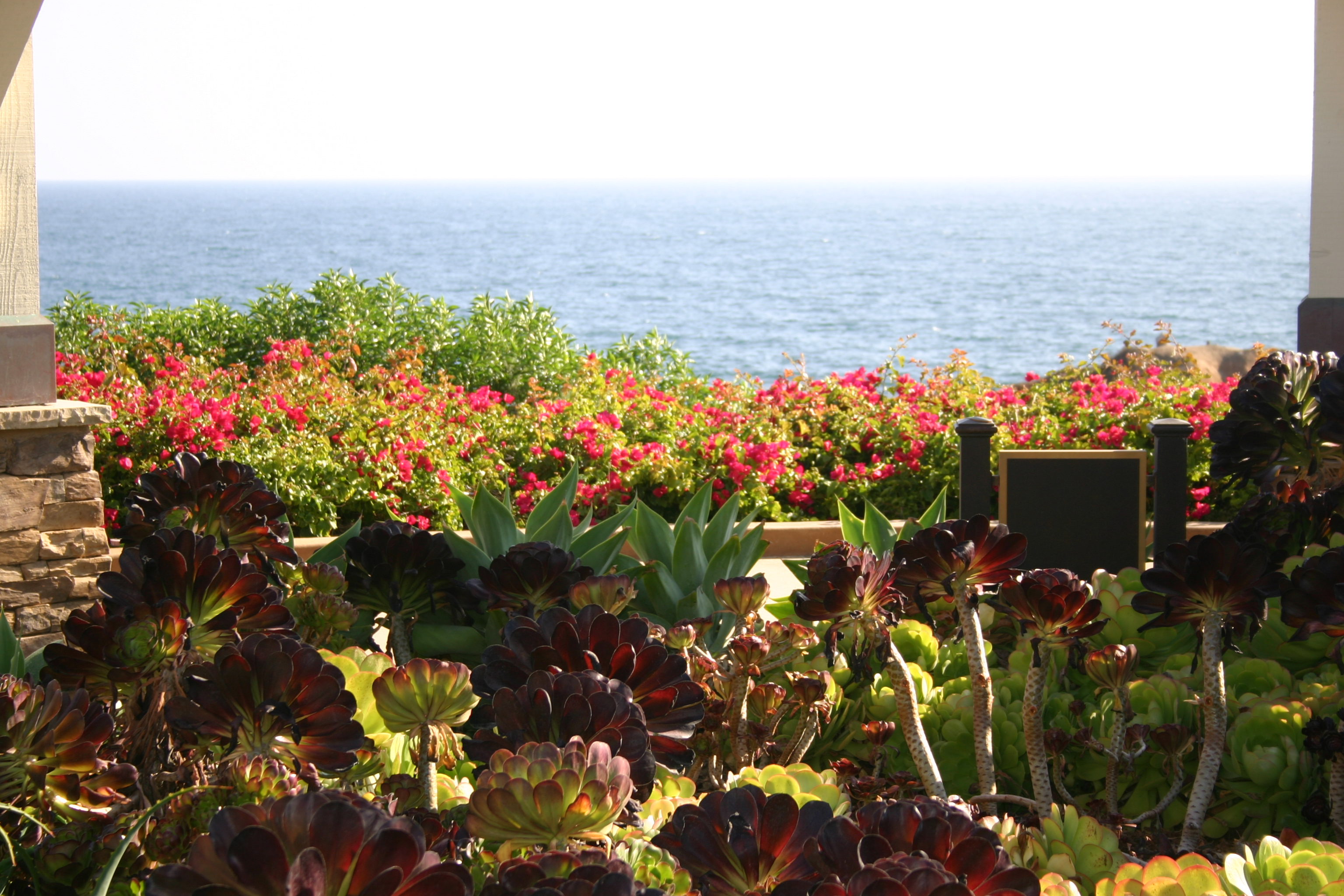 A garden of succulent plants overlook the ocean in Laguna.