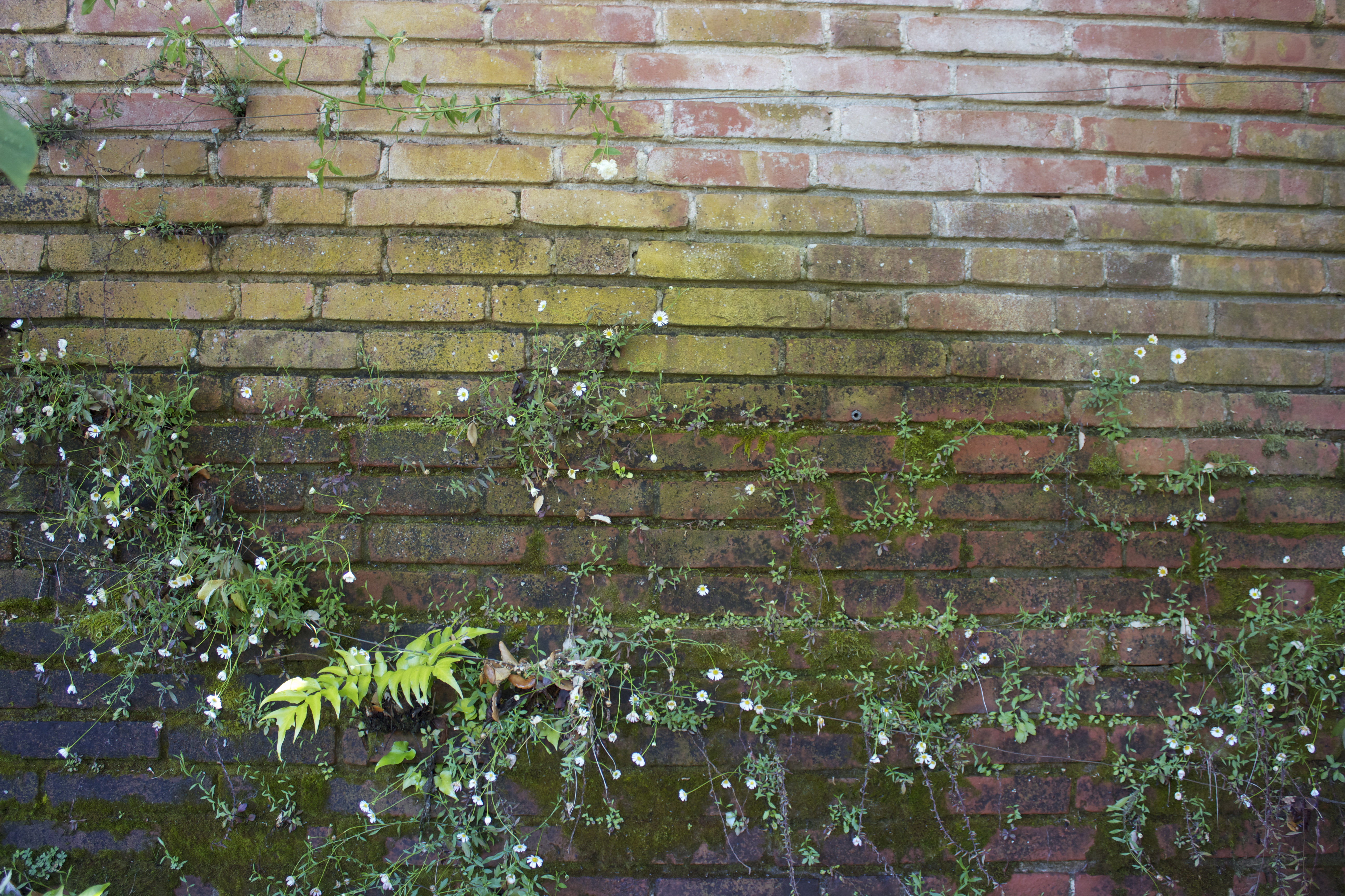Flowers, leaves and moss growing on a brick wall.