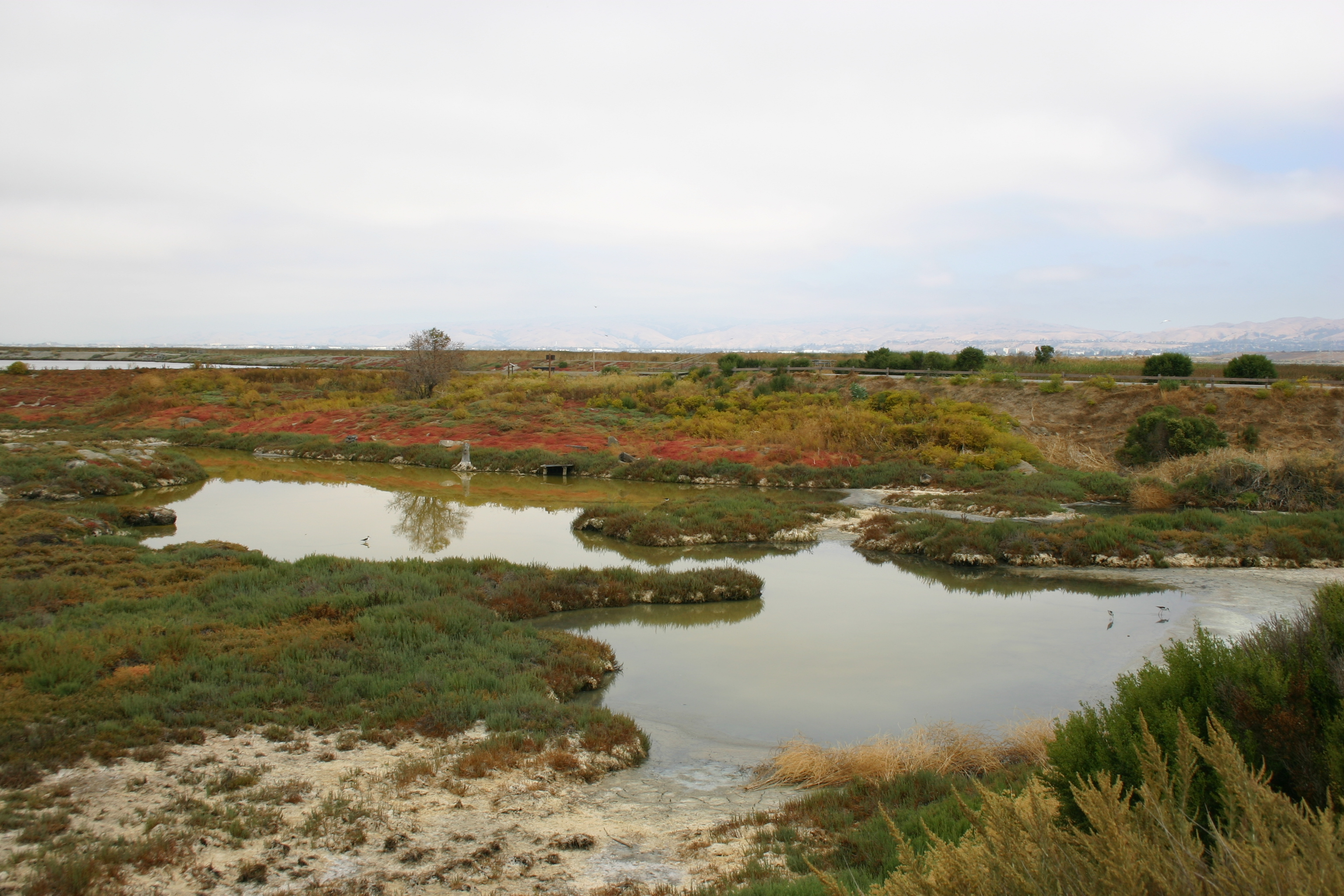 Marsh water curves through a colorful landscape.