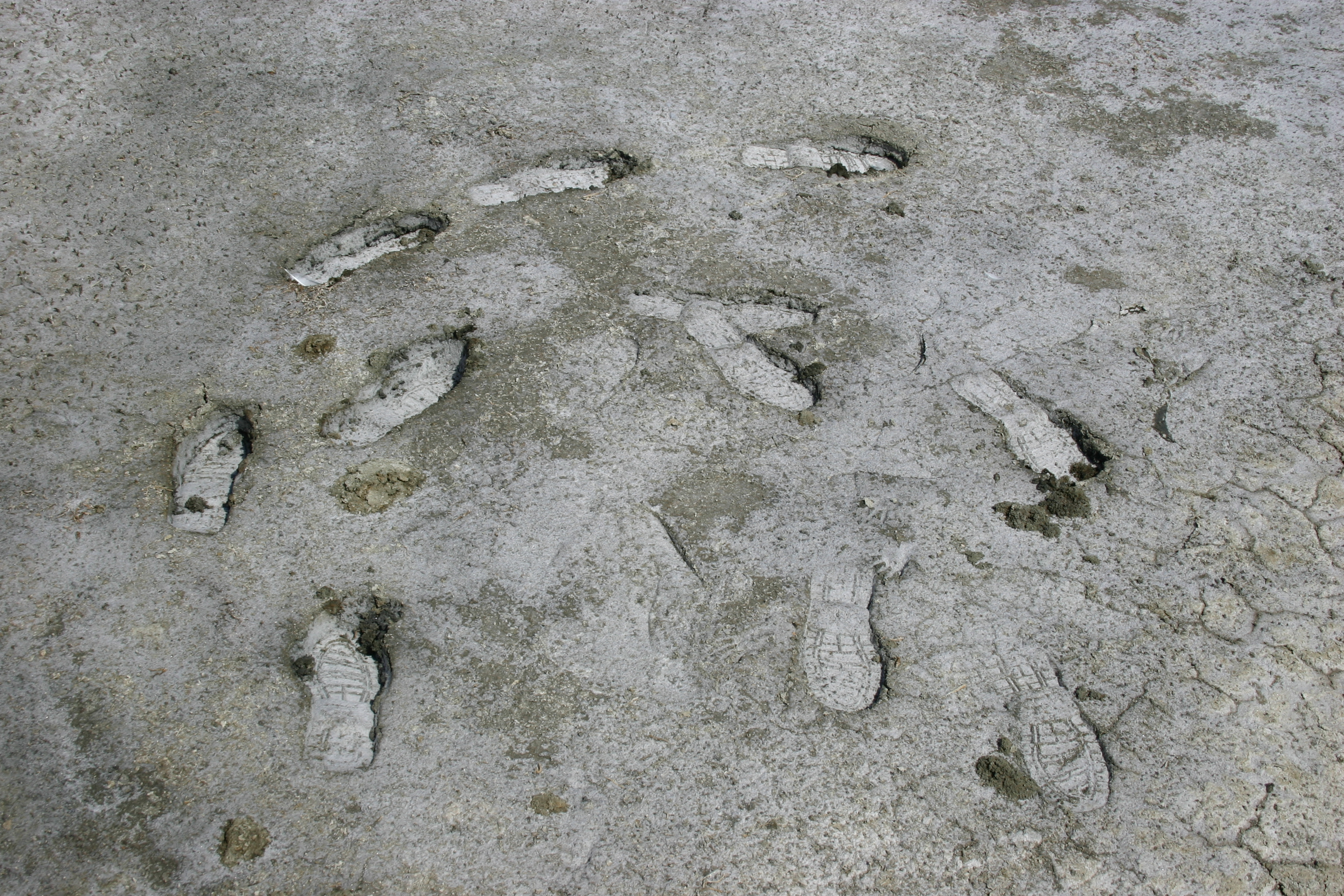 Human shoeprints circle in the mud of a salt marsh.