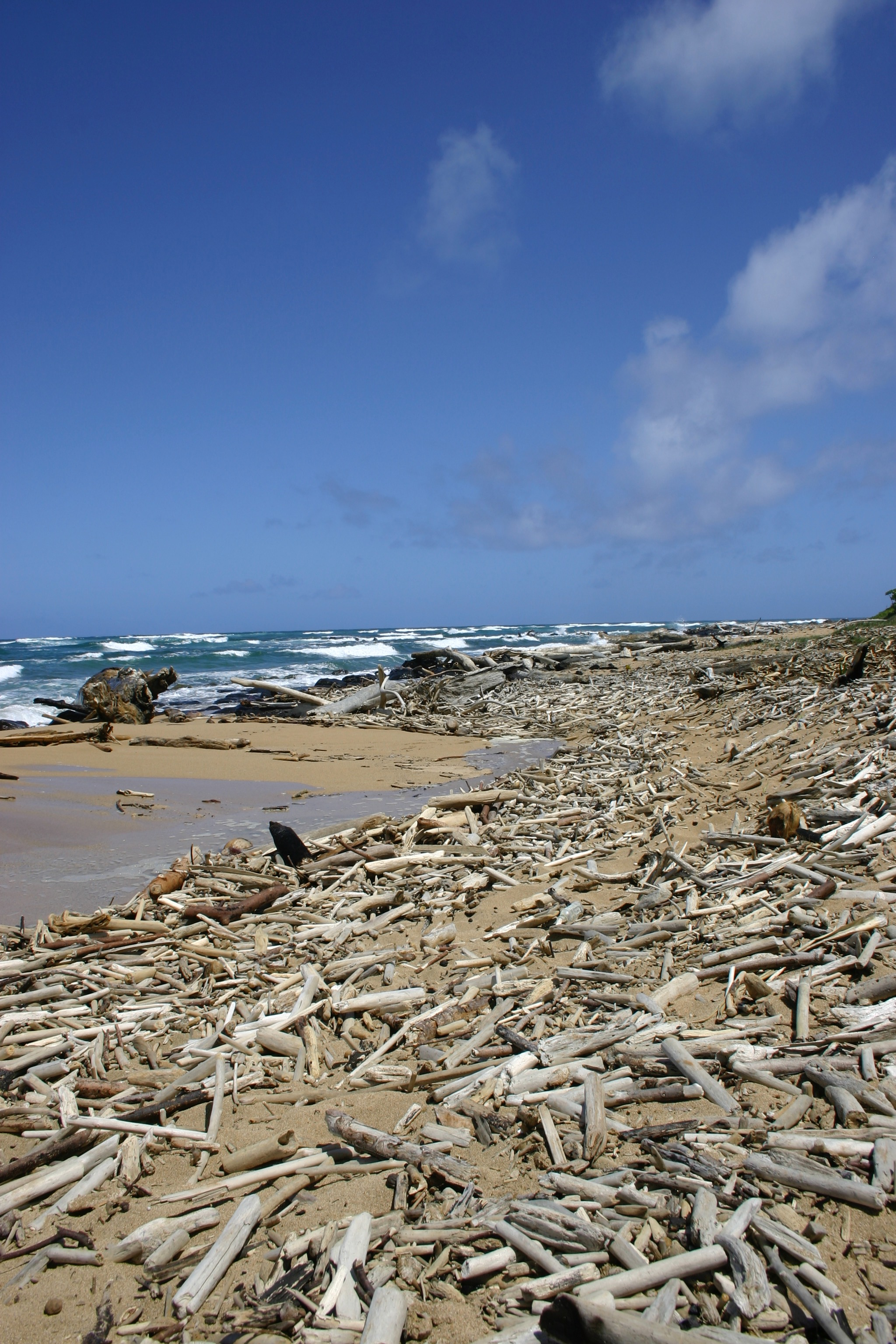 Driftwood litters the beach near the mouth of the Wailua River, where it meets the Pacific Ocean.