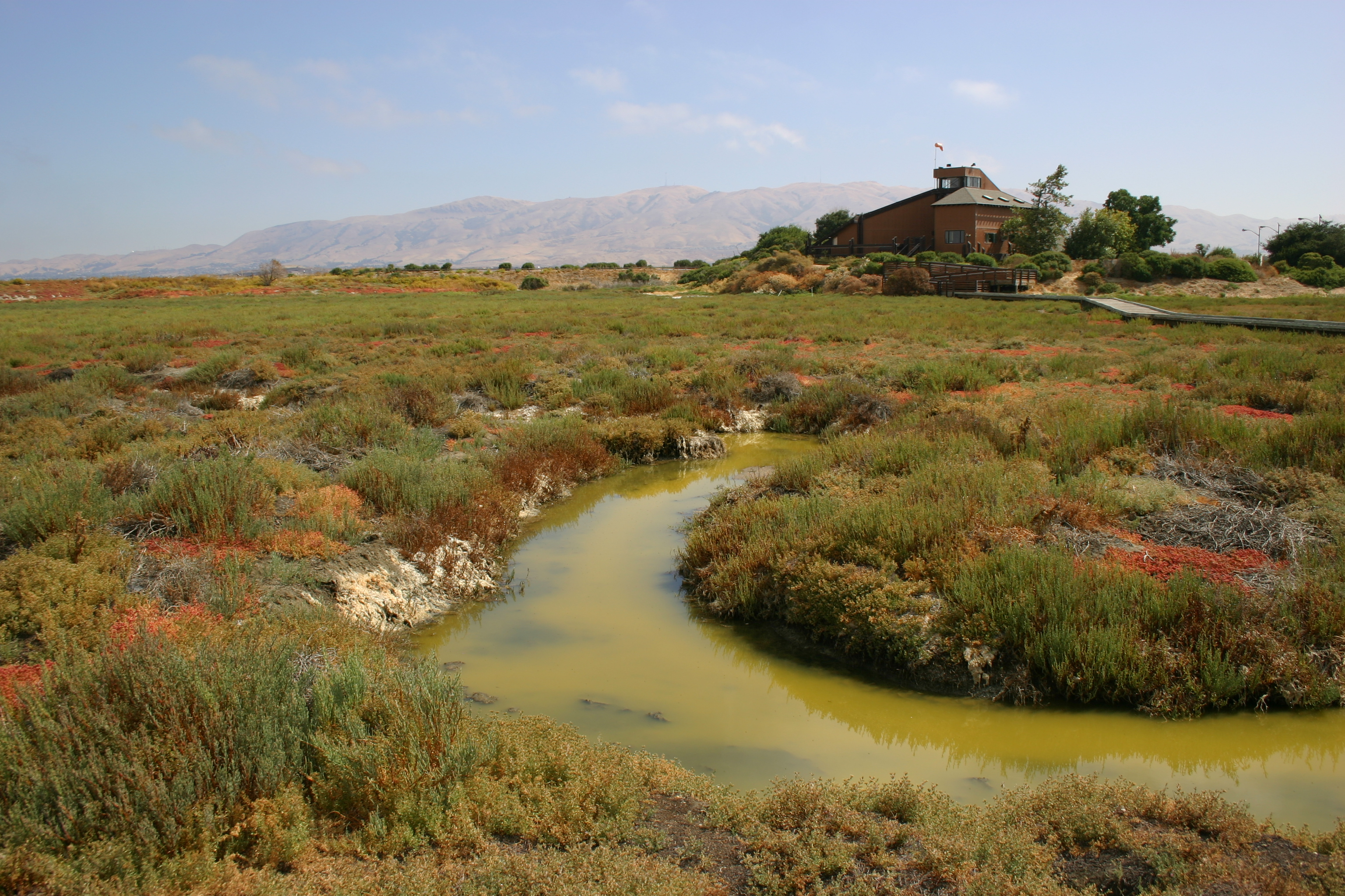 Colorful landscape surrounds a stagnant green river near the Environmental Education Center in Alviso, California.