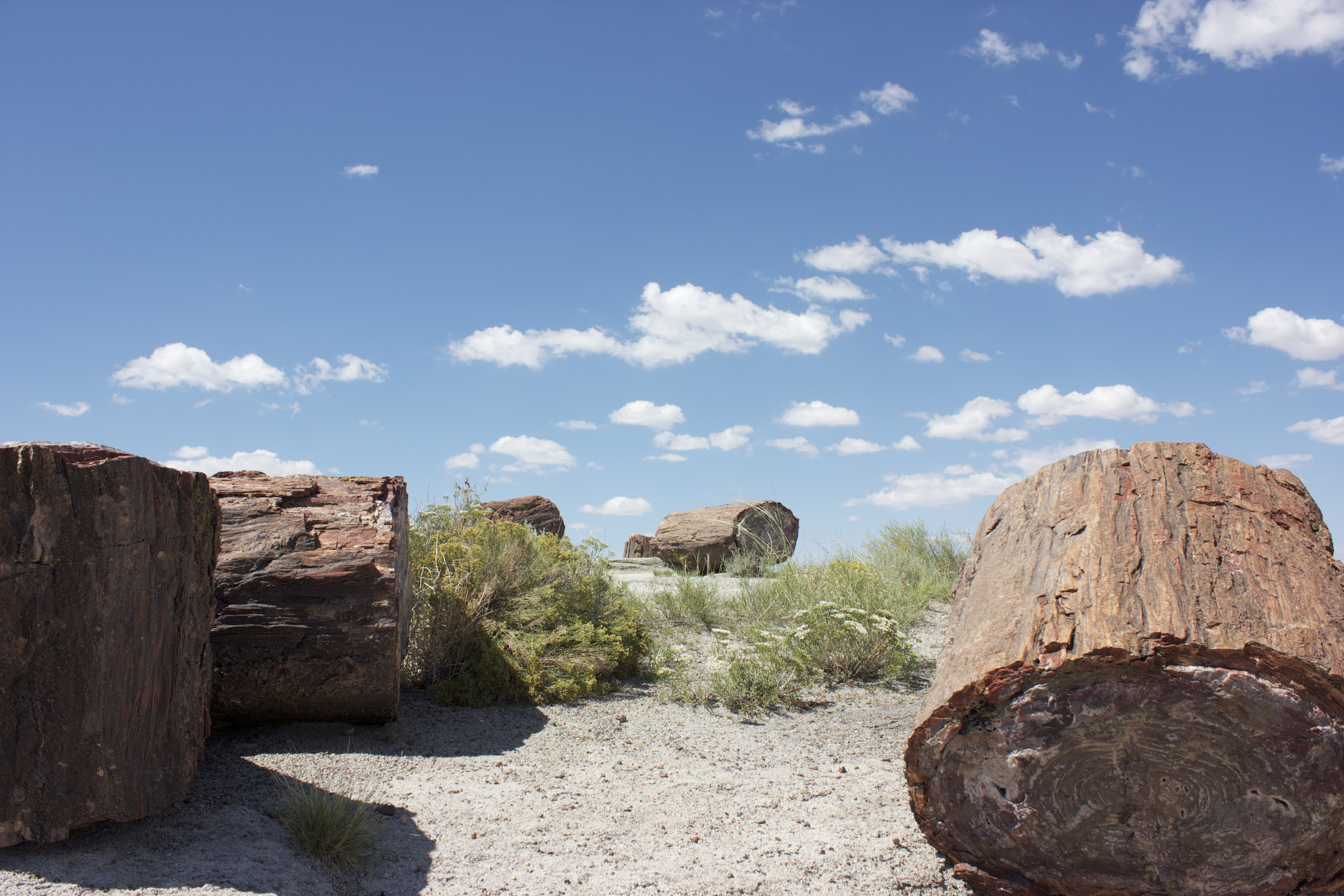 Petrified logs against a cloudy blue sky.