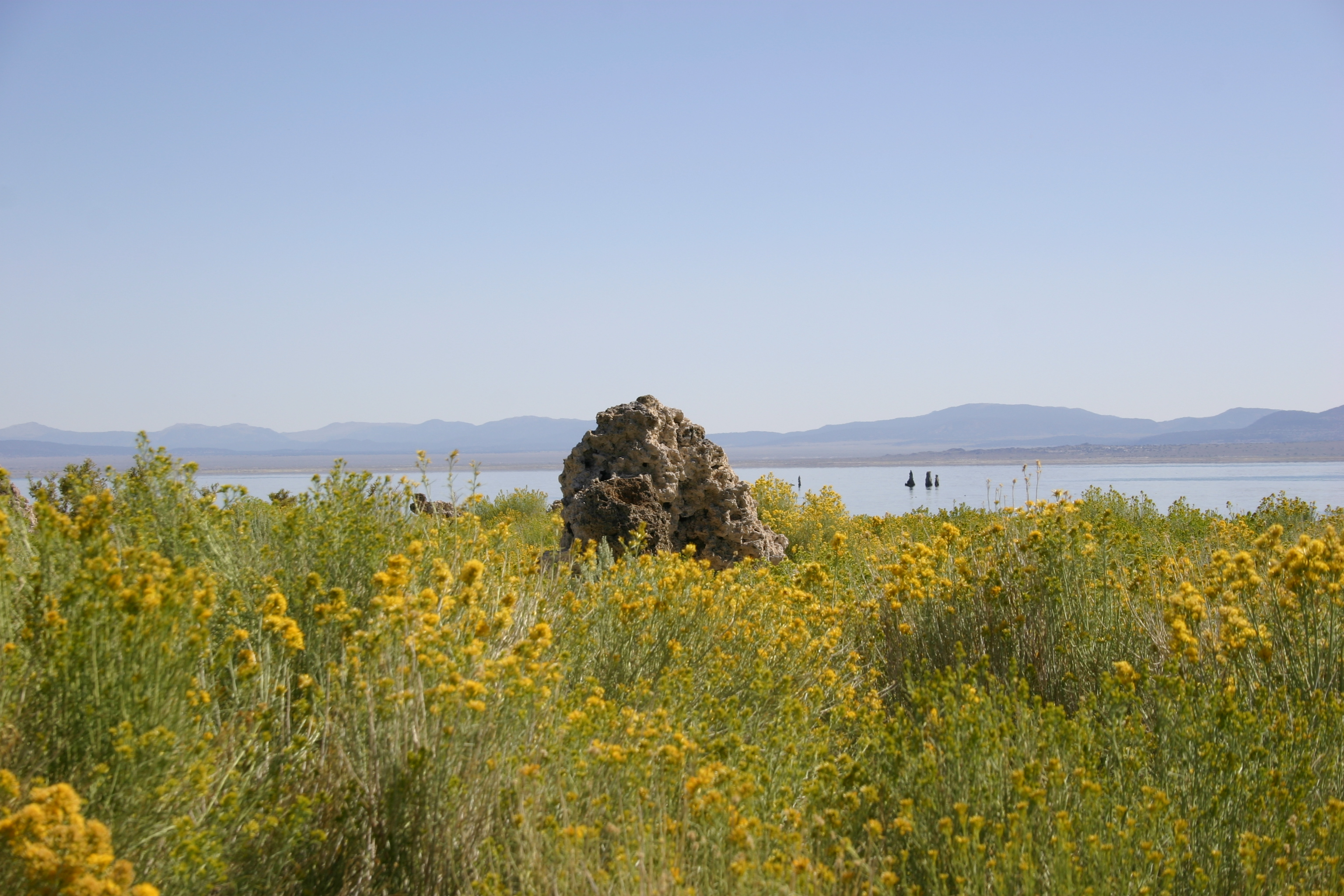Tufa tower surrounded by yellow wildflowers at Mono Lake.