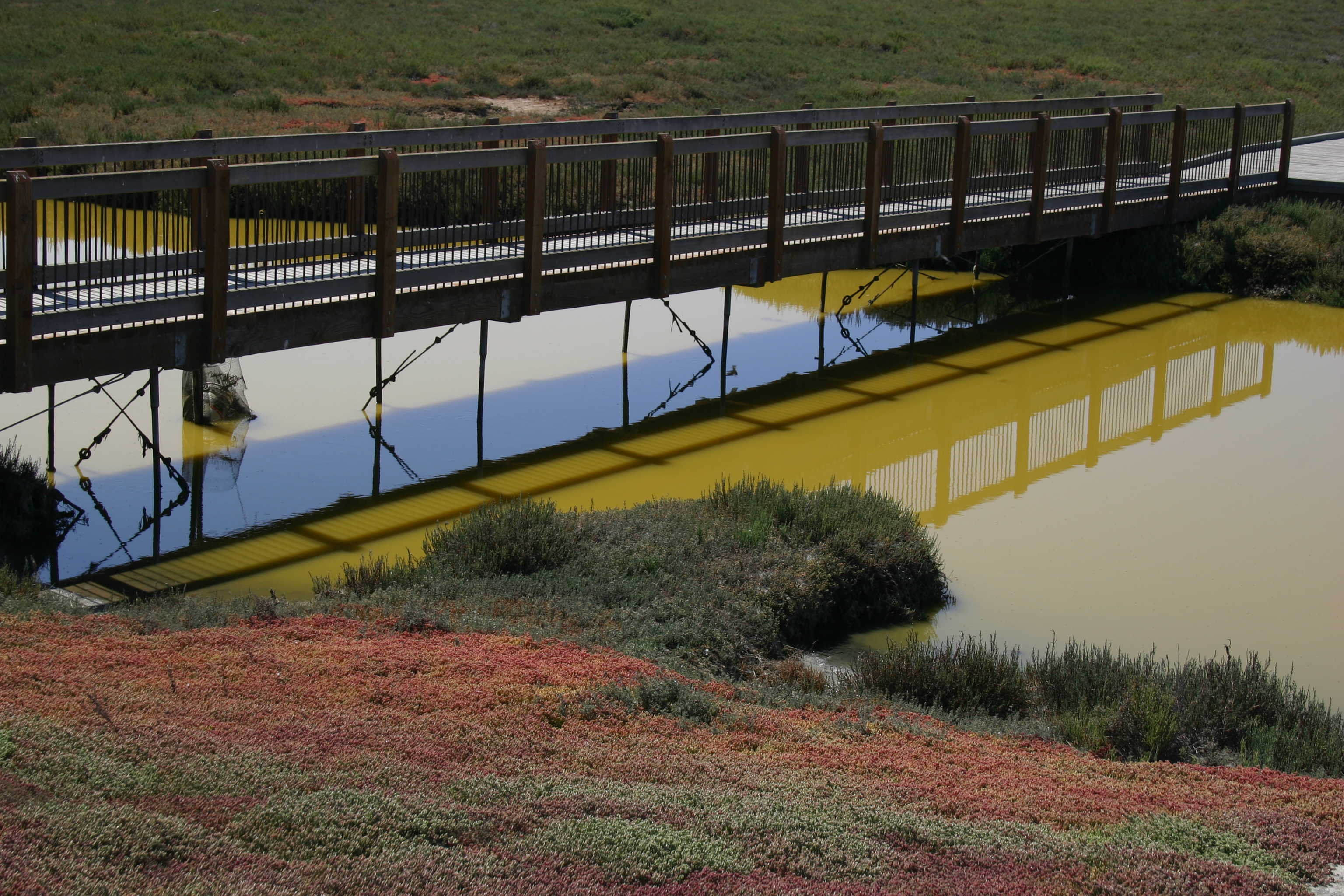 A boardwalk bridge spans the stagnant green water of a salt marsh near a colorful bank.