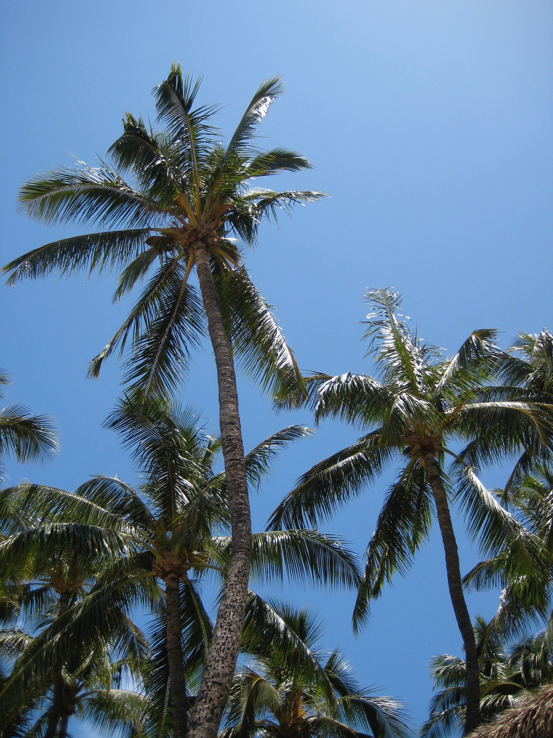 Palm trees against a clear blue sky.