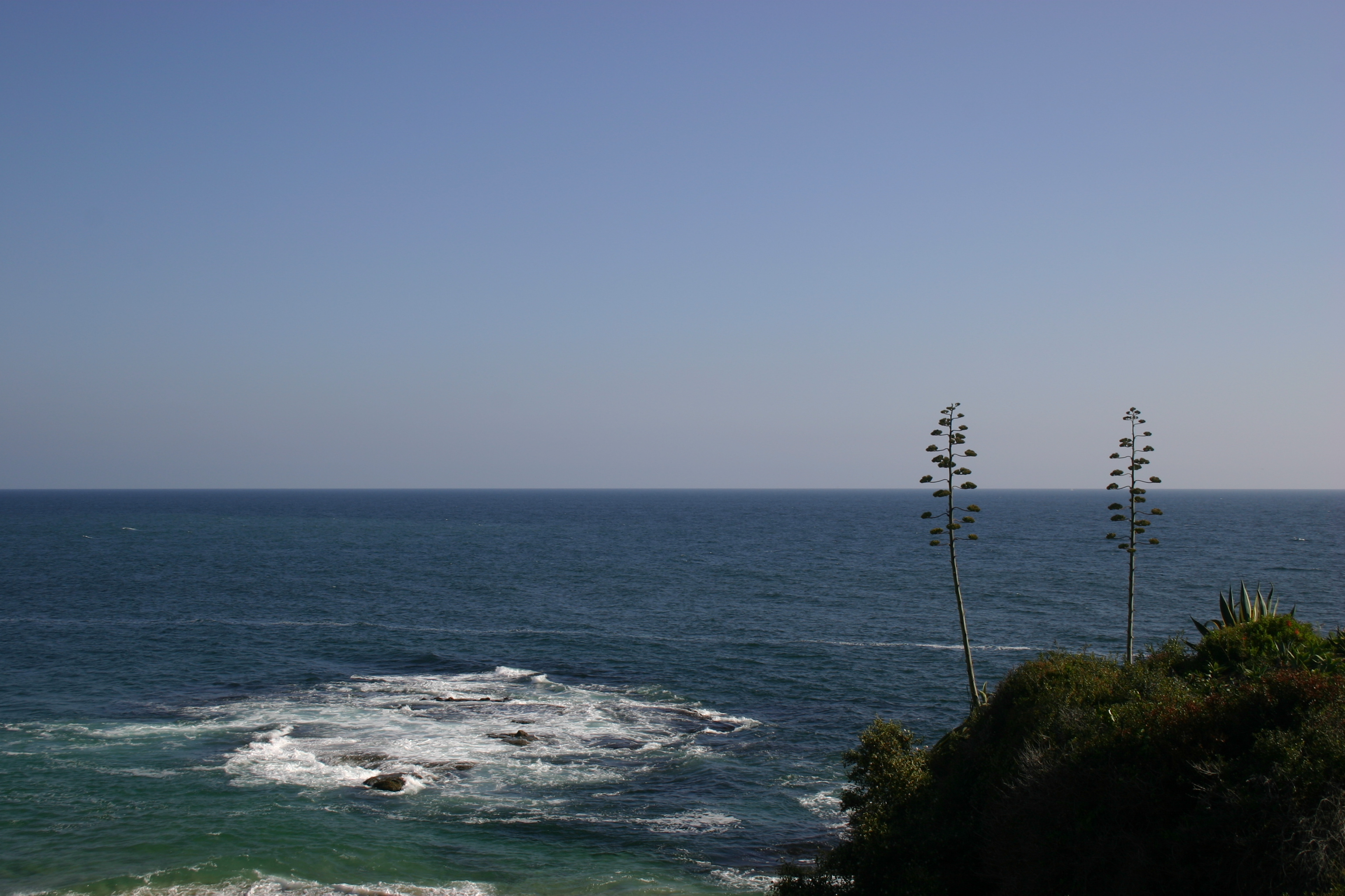 Two tall trees on a hill overlook the ocean and a clear blue sky in Laguna.