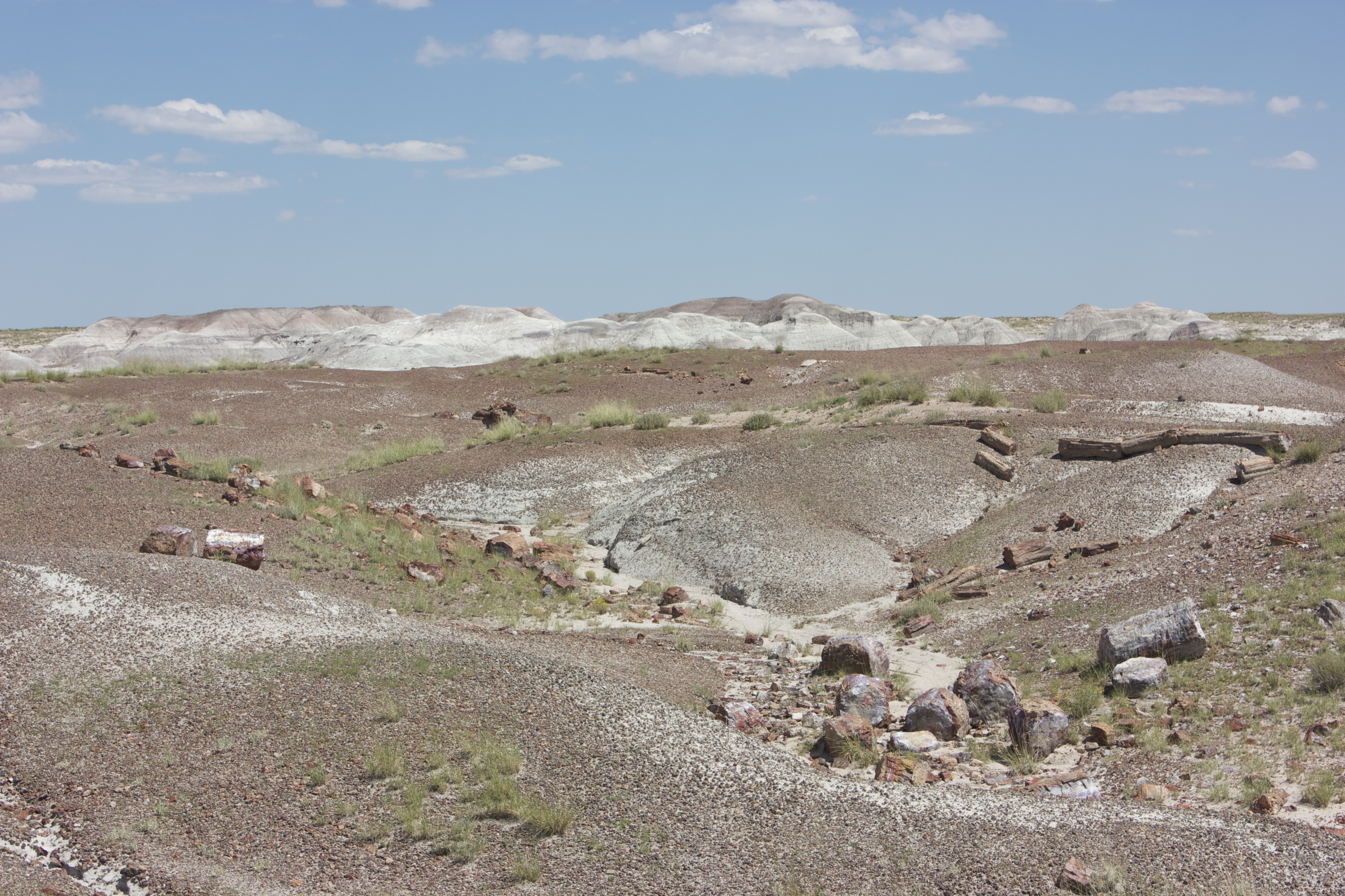 Petrified wood in this desolate landscape has been fossilized and turned to stone.