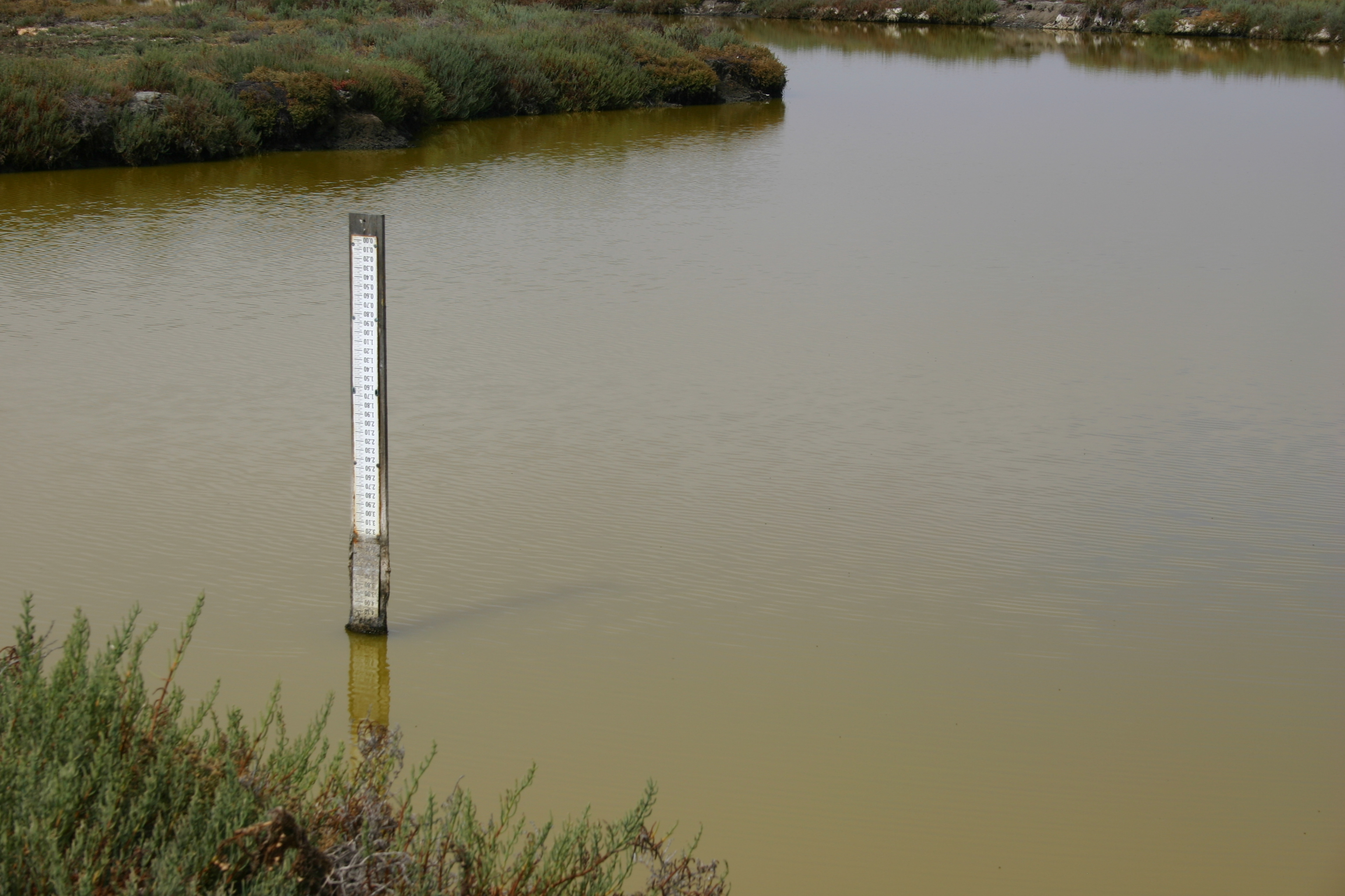 A depth marker in a salt marsh shows stagnant green water to be lower than usual.