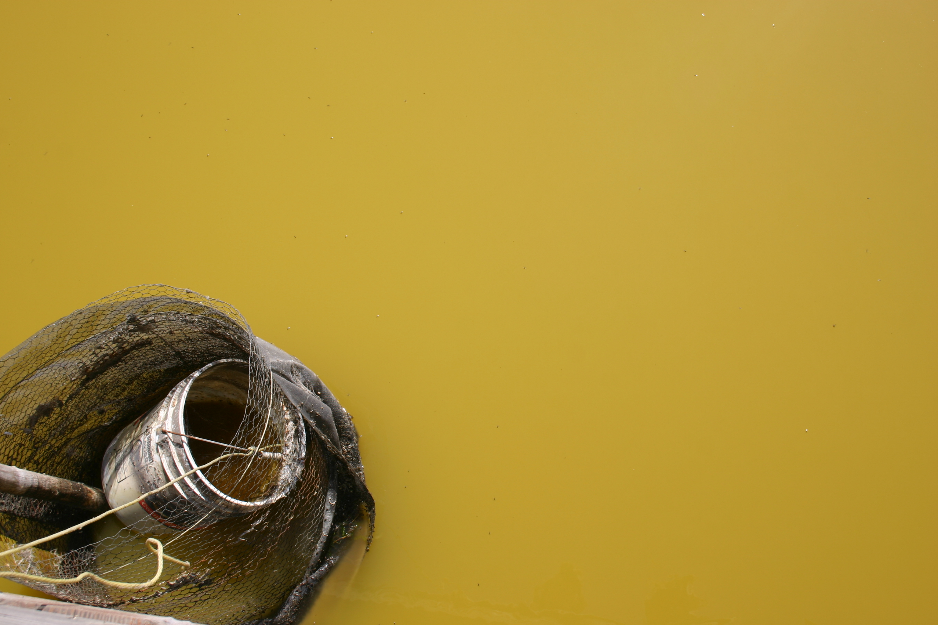A bucket lies forgotten in stagnant green water near a bridge.