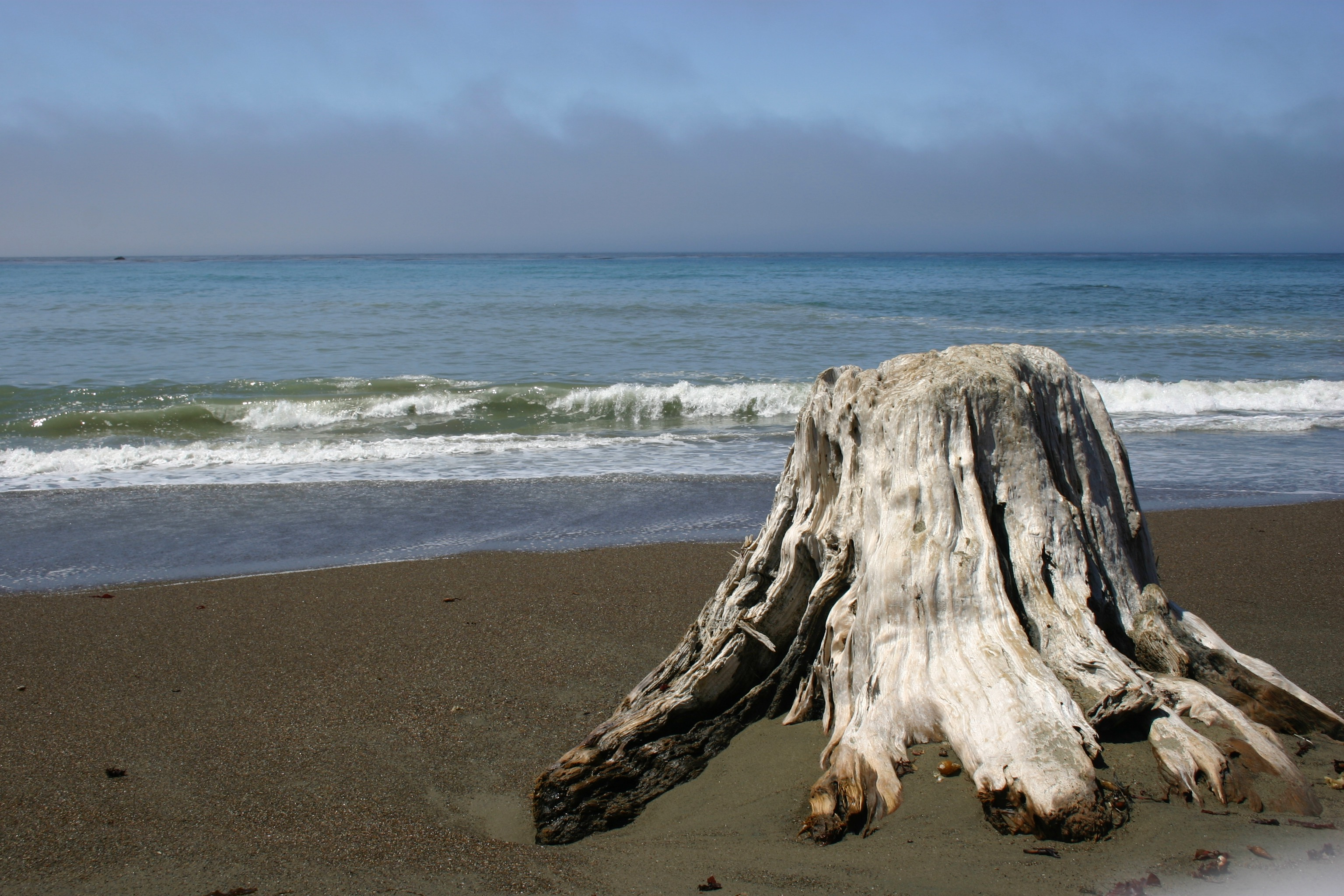 Sun-bleached driftwood tree trunk on the beach.