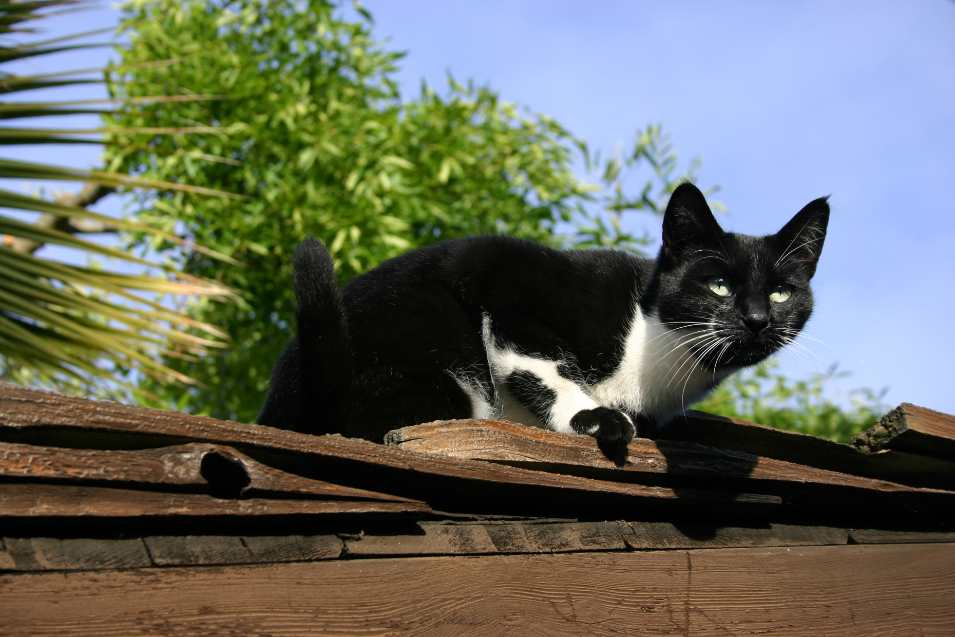 A black and white cat suns herself on a roof.