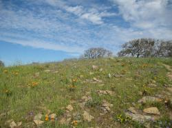Orange poppies alongside purple and yellow wildflowers on a hill in Pacheco State Park, California.