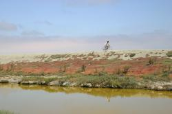 A cyclist reflected in the water of a salt marsh rides across the horizon.