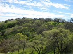 A tree-covered hillside in Pacheco State Park, California.