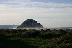 Morro Rock ringed by mist, with greenery in the foreground.