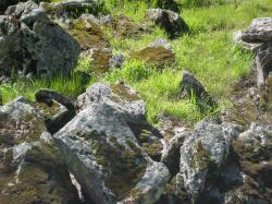 Moss-covered stones in a grassy field in Pacheco State Park, California.