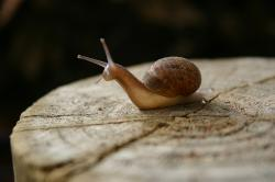 A snail -- or, as I like to call them, a snailien -- shows off translucent skin.
