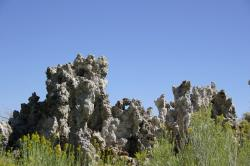 Yellow wildflowers in front of tufa towers at Mono Lake.