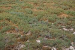 Can you see the jackrabbit? He's decently camouflaged.