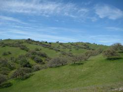 Trees traverse the hills in Pacheco State Park, California.