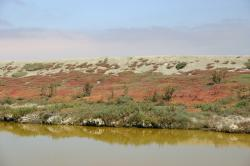 Colorful plants grow on the bank of the green waters of a salt marsh.