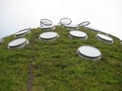 Round skylights on the Living Roof atop the California Academy of Sciences.