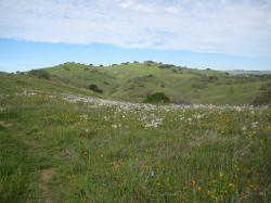 Beautiful hills and wildflowers in Pacheco State Park, California.