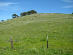 A flimsy fence somehow manages to contain a huge hill in Pacheco State Park, California.