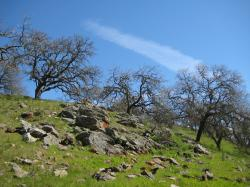 Ancient stones and gnarled trees share a grassy hillside in Pacheco State Park, California.