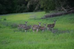 A family of deer in a meadow.