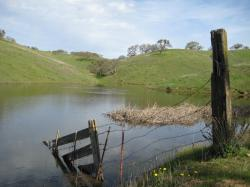 Remnants of a fence falling into Dinosaur Lake in Pacheco State Park, California.