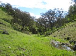 Green tree-dotted hills converge to form a small stream valley in Pacheco State Park, California.