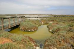 A boardwalk bridge spans stagnant green water in a salt marsh.