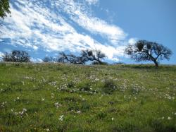 Wildflowers dot a field under a bright sky in Pacheco State Park, California.