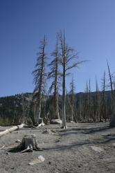 Natural CO2 emissions from a magma body beneath Mammoth Mountain asphyxiated more than 100 acres of trees near Horseshoe Lake in the early 1990s.
