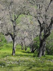Wildflowers brighten a grove of trees in Pacheco State Park, California.