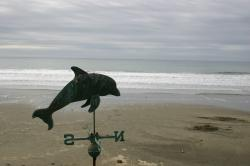 Dolphin weathervane on a lonely beach.
