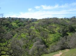 Tree-rich hills in Pacheco State Park, California.