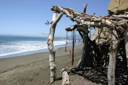 A hut constructed of driftwood and seaweed on the beach.