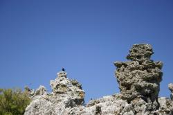 Black birds sit atop tufa towers at Mono Lake.